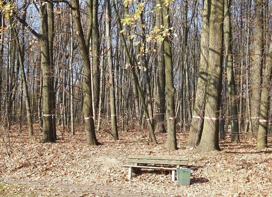 Wraca sprawa Parku Śląskiego i ogromnej ilości drzew do wycięcia. Co potem? Biurowce, bloki mieszkalne, a może centrum handlowe?