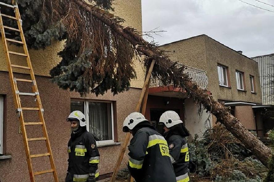 Strażacy znów mają co robić. Nad jedną z najważniejszych dróg regionu niebezpiecznie nachylone drzewa.