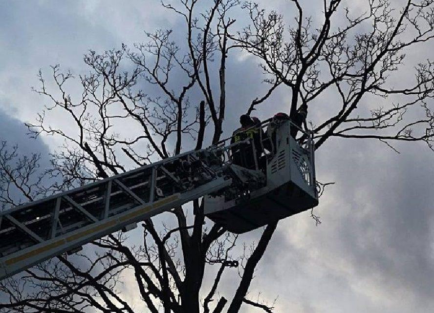 Nasza czytelniczka donosi o dużej awarii sieci energetycznej w Katowicach. W całym województwie dramat. Brak prądu, powalone drzewa blokujące jezdnie i szlaki kolejowe.