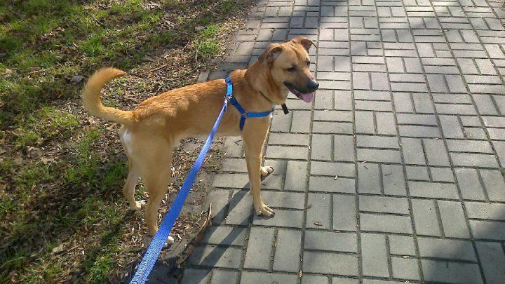 """Kilka zwierząt jest w ciężkim stanie. W różnych miejscach Katowic ktoś rozrzuca """"przysmaki"""" mające zabijać psy."""