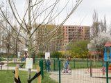 Mieszkańcy znowu mogą zgłaszać miejsca na nowe drzewa.