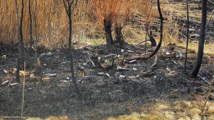 Ten alarm to akt rozpaczy. Na coś takiego natknął się jeden z mieszkańców Katowic. Tam zginęły rośliny i zwierzęta, a miejsce po nich wypełnić mają odpady.