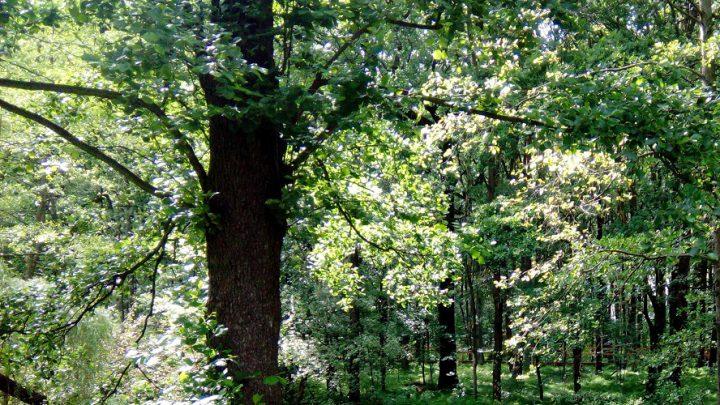 To będzie niezwykły las. Składać się ma wyłącznie z drzew zasadzonych na pamiątkę urodzin małych katowiczan.