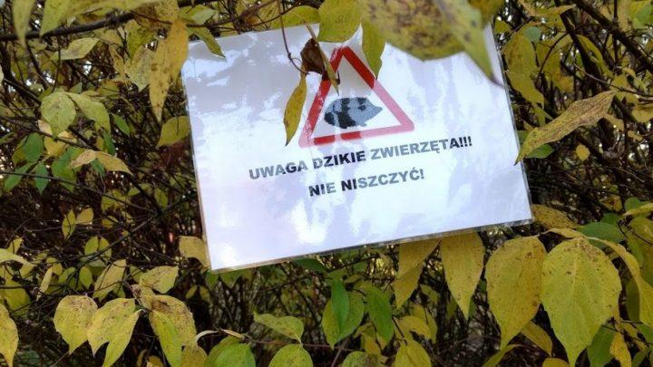 Za przykładem Koszutki powinny pójść pozostałe dzielnice Katowic, a także mieszkańcy innych miast naszej aglomeracji. Dzięki dzisiejszej akcji jeże mają jak przetrwać zimę.