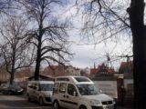 Radni wzywają mieszkańców Katowic, by wraz z nimi zorganizowali pospolite ruszenie. Na ratunek stuletnim kasztanowcom, które skazano na zagładę.