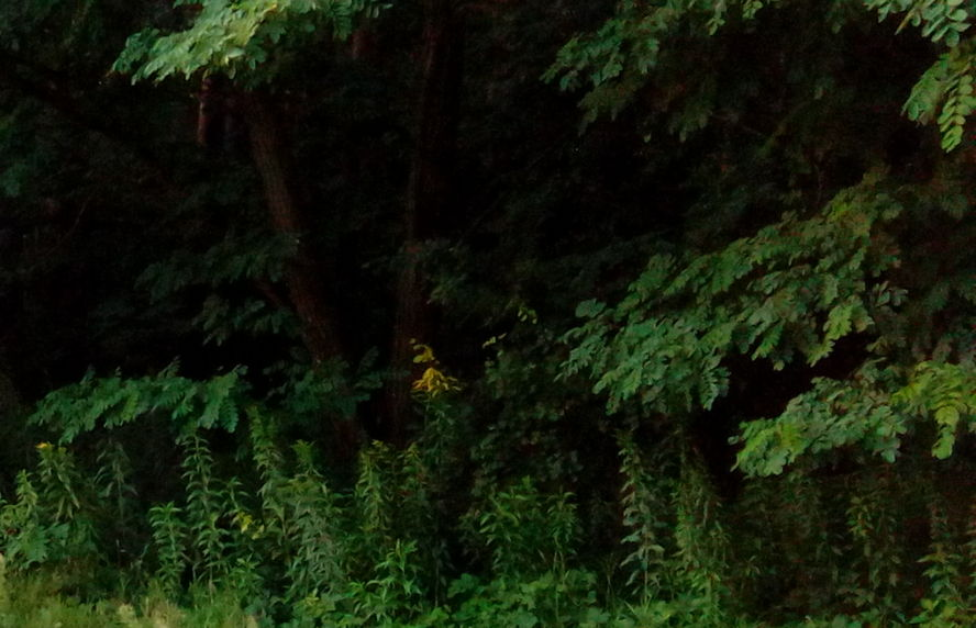 Mieszkańcy katowickiego osiedla skarżą się na coraz większy hałas. Jedną z przyczyn jest wycięcie szpaleru drzew.
