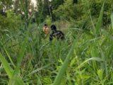 Poszukiwania ciągle nie dały żadnego rezultatu. Opublikowano komunikaty o zaginionym mieszkańcu Katowic i osobny o zaginionej sosnowiczance.