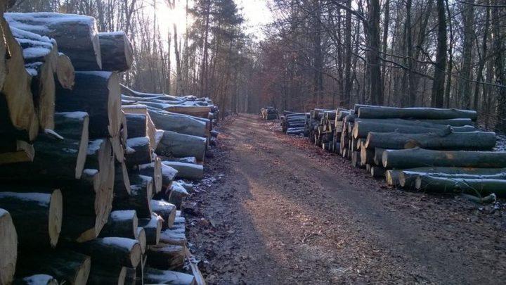 Nasza czytelniczka bije na alarm i przesyła zdjęcia. Leśnicy wycinają katowickie lasy.