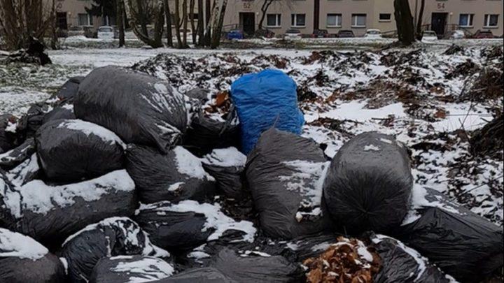 Odpadowa samowolka w Bytomiu. Dlaczego musimy mieszkać przed takim hasiokiem – pytają mieszkańcy?