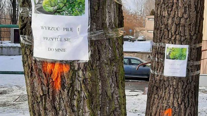 Po przepięknych kasztanowcach z ul. Raciborskiej deweloperzy planują unicestwić kolejne drzewa w Katowicach.