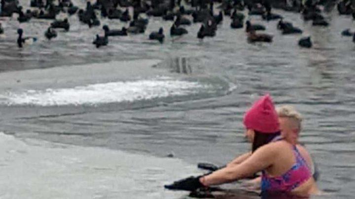 Na wezwanie Towarzystwa Opieki nad Zwierzętami z Katowic odpowiedziały morsy i radny z Sosnowca.  Z wielkim poświęceniem skuwano lód na stawie, by ptaki miały co jeść.