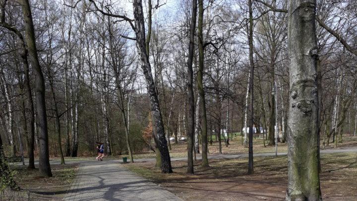 Mieszkaniec Katowic próbował złapać mężczyznę, który obnażał się w parku na Zadolu.