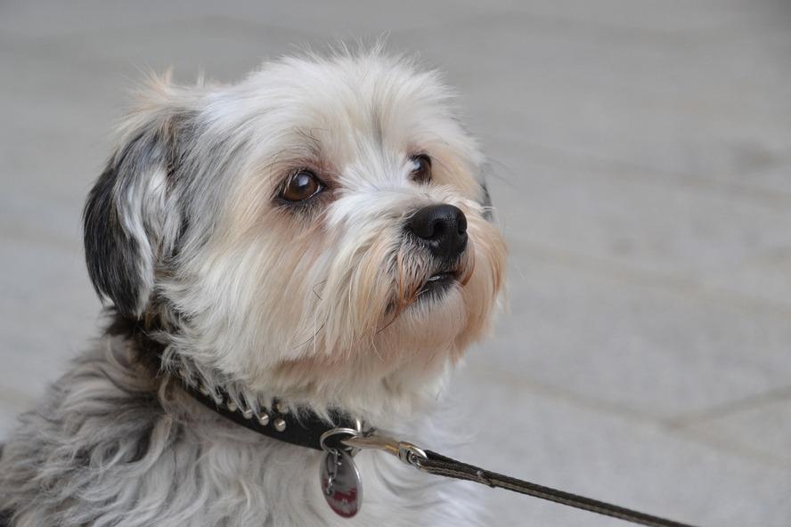 Pies w śródmieściu Katowic.