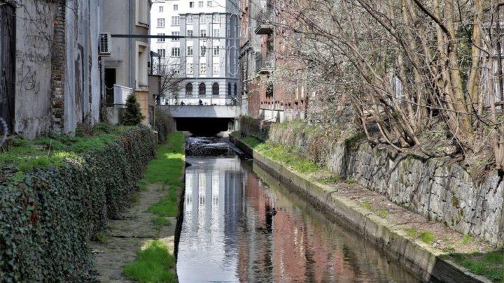 Zakończono czyszczenie Rawy. Czyszczone było koryto rzeki a także jej brzegi w Katowicach.