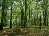 13 hektarów Lasu Murckowskiego pod ochroną – buki zostały ocalone.